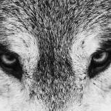 lbxwolf